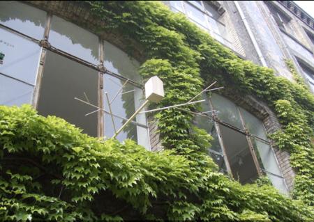 passarinhos na janela