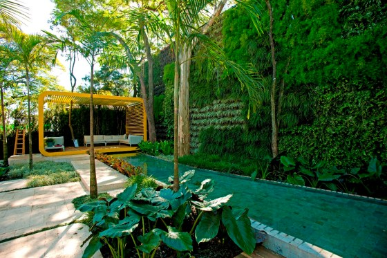 jardim vertical no muro : jardim vertical no muro: no quintal da vovó ele fez uma linda composição no muro criando