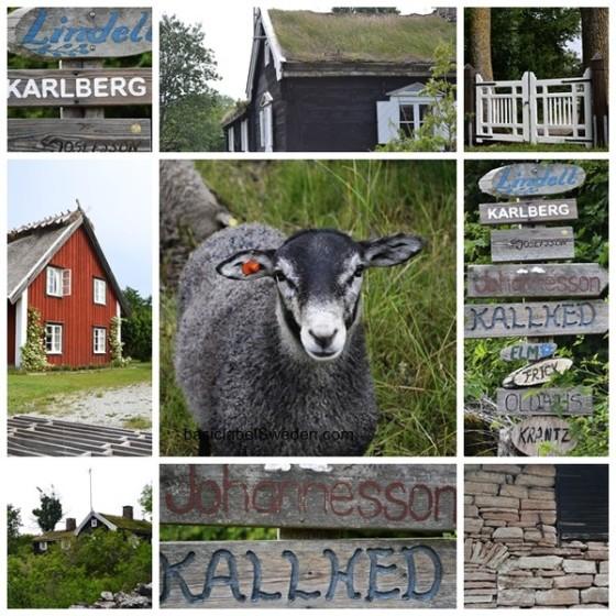 inspiração rural