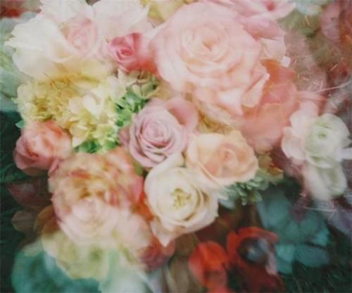 foto de flores rosa