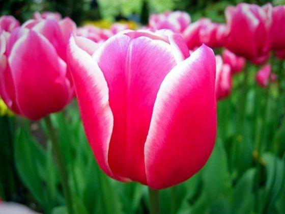 Flores foram inspiração para Eero Saarinen e Pierre Poulain